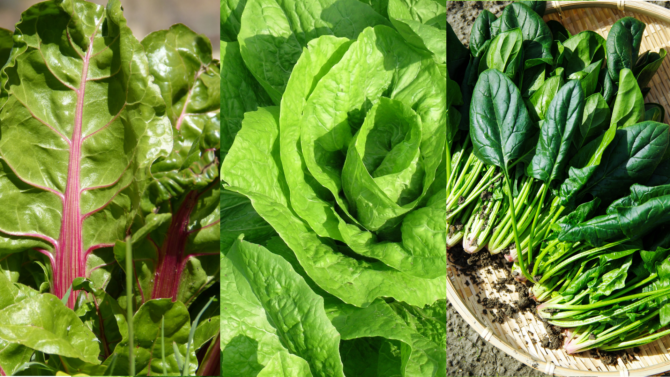 Amazing benefits of Green Leafy Vegetables